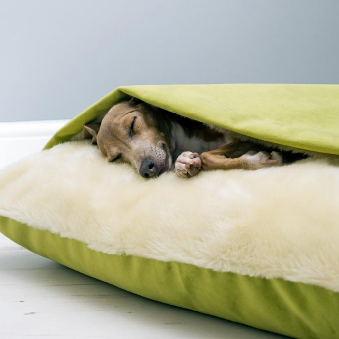 Charley Chau Snuggle Bed in Velour