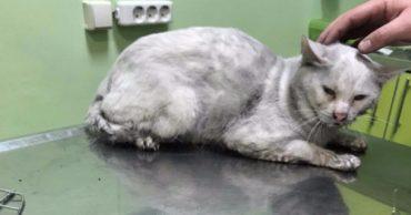 «Только дышите, пушистики!» Одесситы объединились, чтобы спасти котов, которые пострадали на недавнем пожаре!