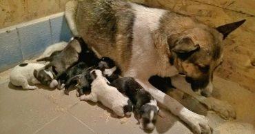 11 новорожденных смертников: в Киеве под трассой в сточной трубе нашли щенков и маму-героиню!