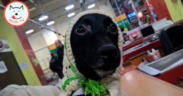 Пёс Чак
