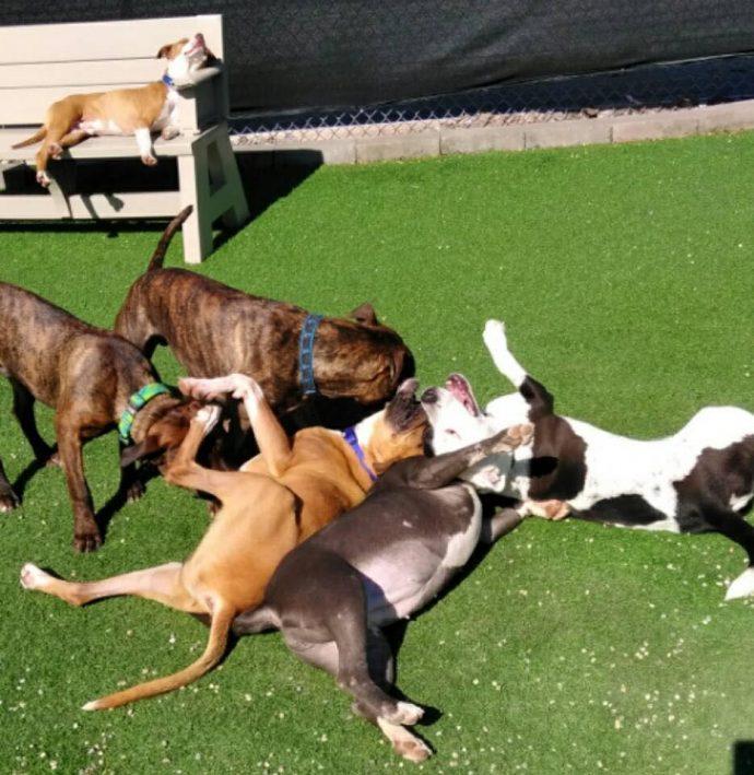 «Собака бывает кусачей…» В этом приюте даже самых агрессивных собак превращают в няшек с помощью АРАХИСОВОГО МАСЛА! рис 7