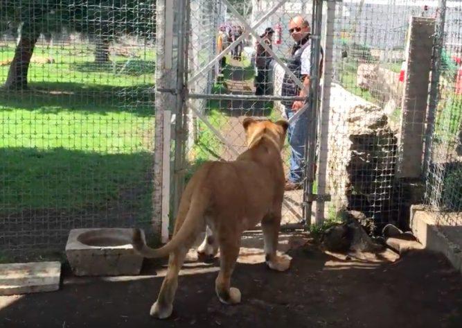 01-kiara-lioness-667x473