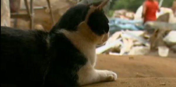 Загадочное исчезновение собаки по вечерам удивляло хозяйку. Она проследила за ней - и открытый секрет растрогал её до глубины души! рис 4