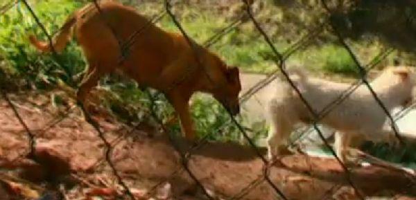 Загадочное исчезновение собаки по вечерам удивляло хозяйку. Она проследила за ней - и открытый секрет растрогал её до глубины души! рис 6
