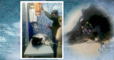 За верность отплатили жестокостью… В Самаре собаку-поводыря для слепых избили и бросили умирать в мусор!