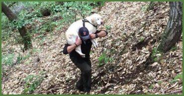 """""""Я положил его себе на плечи и понёс через лес..."""" Парень нашел в ручье слепого старого лабрадора, а вознаграждение отдал в приют!"""