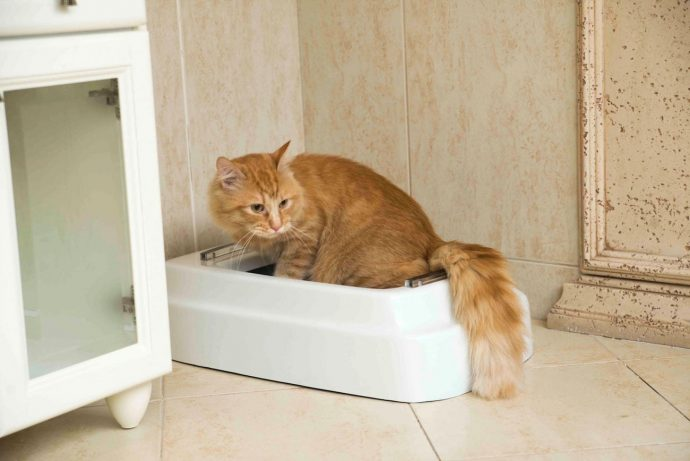 CATOLET-Smart-Automatic-Litter-Box-02