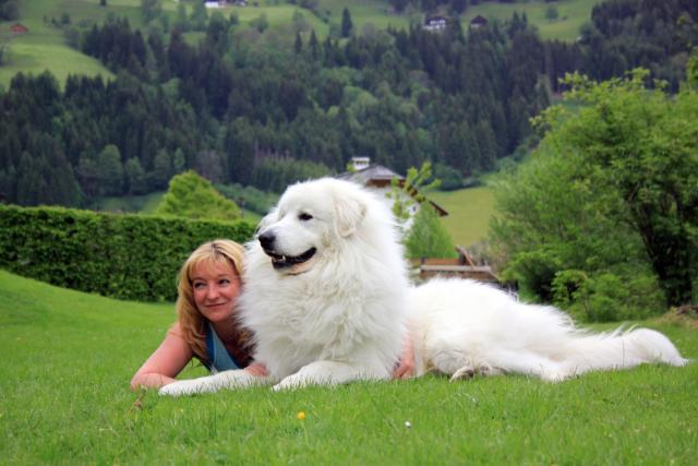 Пиренейская горная собака (Pyrenean Mountain Dog и Great Pyrenees) 3
