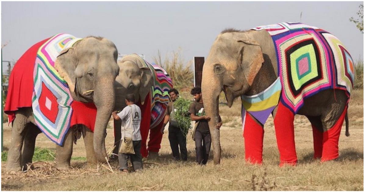 """""""Кому пончо, кому накидку, кому одеялко?"""" В Индии для слонов вяжут свитера и комбинезоны, чтобы помочь им пережить холода! рис 5"""