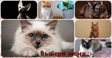MyCollages (37)