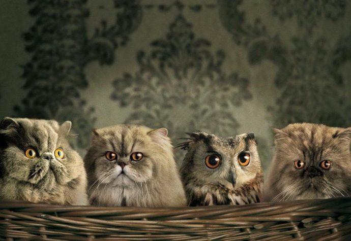 Черная кошка - к счастью! И белая тоже :) 15 новых примет о пушистиках! рис 2