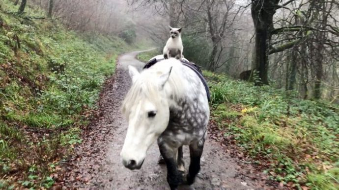 2_CATERS_HORSE_RIDING_CAT_02-768x432
