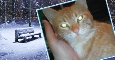 «Под кустом что-то шевелилось!» Девушка в 30-градусный мороз нашла ледяного кота в мешке!