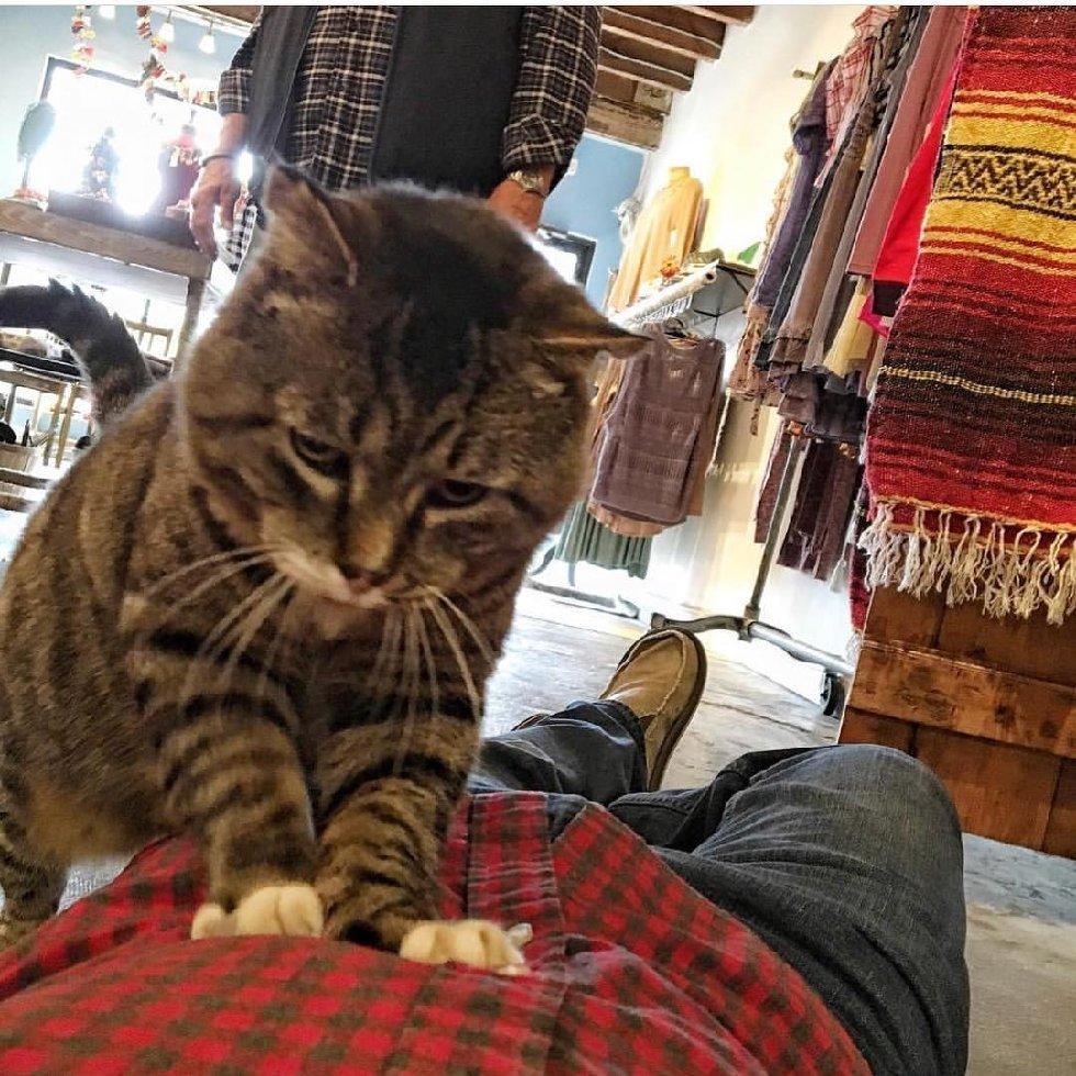 Что делает этот вальяжный кот? Не жизнь, а малина у товарища! А ведь раньше... рис 6