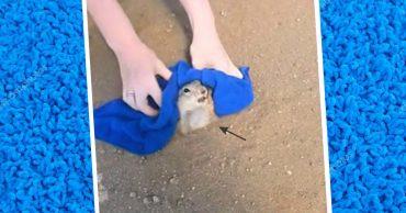 Синее полотенце - вещь первой необходимости при спасении суслика, который застрял в собственной норе! :)