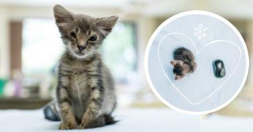 Малышка Лорэйн не моргает и не растёт... И вот что люди решили сделать с этой удивительной мини-кошкой!