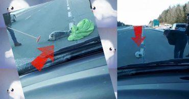Осторожно, на дорогах ожидаются тюлени! Не забудьте спальный мешок и швабру...