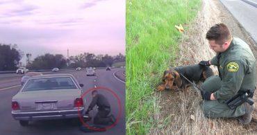 """""""Его практически намотало на колесо!"""" У этого пса всё пошло не так... пока не случился хэппи-энд!)"""