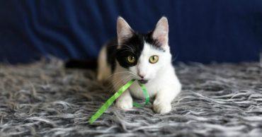 Девочка с длинной косой чёлкой: нежная кошка Тильда зовёт вас на чашку молока - познакомиться!