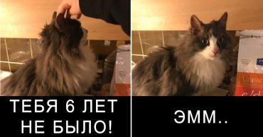 """""""Гоните догов! От них одни неприятности..."""" Рассказ кота Адольфа, который случайно потерял 6 лет своей жизни"""
