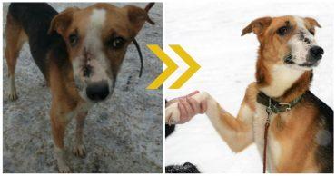 Собака бродила по улицам, в одиночку справляясь с болью... Пока замечательные люди не решились заглянуть ей в глаза!)