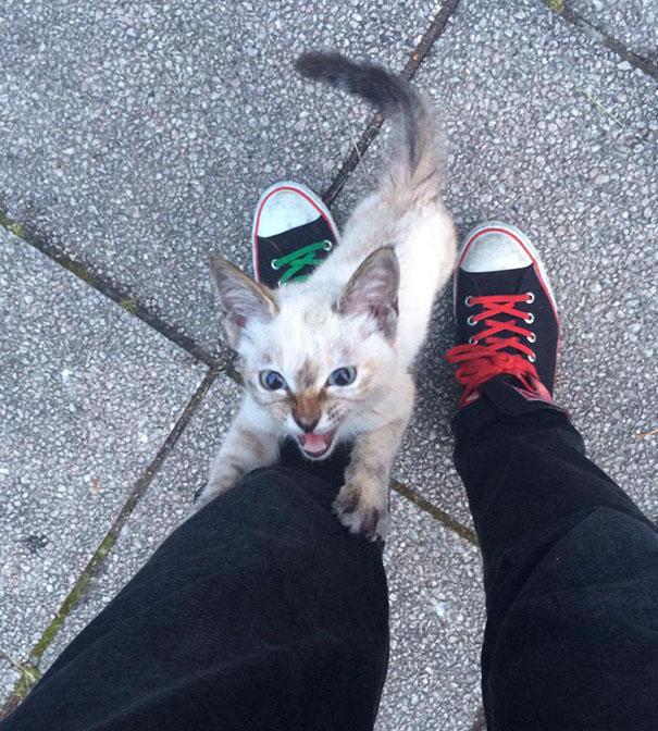 stray-cat-chooses-owner-vell-kawasaki-hina-48.jpg