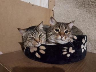 Миссия кота: заполнить собой ВСЁ! А вы знали, что они умеют архивироваться и распаковываться?