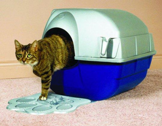 Как приучить к лотку котёнка? Виды и расположение в квартире кошачьего туалета рис 2