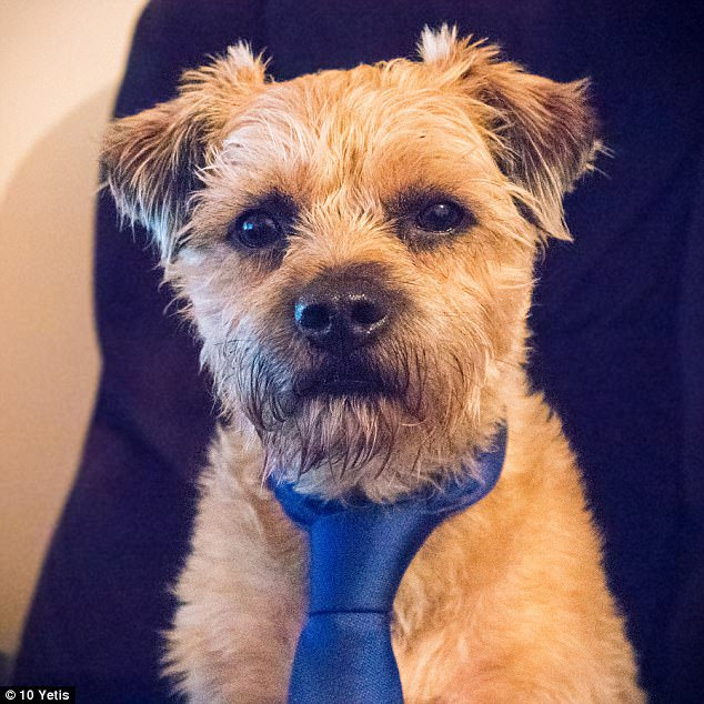 488AE60500000578-5307857-Dexter_the_terrier_looks_adorable_in_his_silk_tie_as_he_poses_fo-a-16_1516810774487