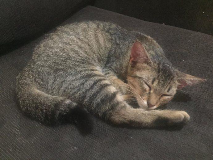 Котёнок оказался заперт в закрытом магазине НА НЕДЕЛЮ... Посмотрите, что сделал для него этот человек! рис 5