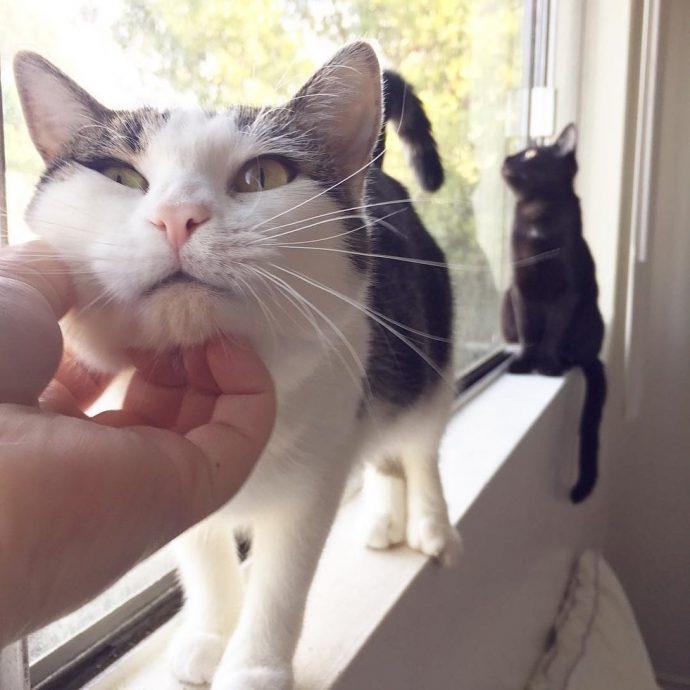 «Это хорошее место, я буду жить здесь...» Деловая кошка пришла в дом не как гостья, а как хозяйка... с молодняком!) рис 8