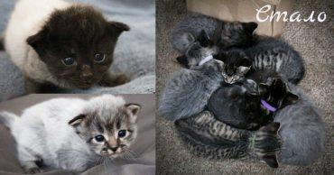 """""""Седые"""" котята родились у чёрной кошки! И вдруг их шерсть сменила цвет по удивительной причине..."""