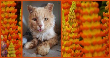 Его нашли замученным и печальным... Но уже через час кот не узнал сам себя!