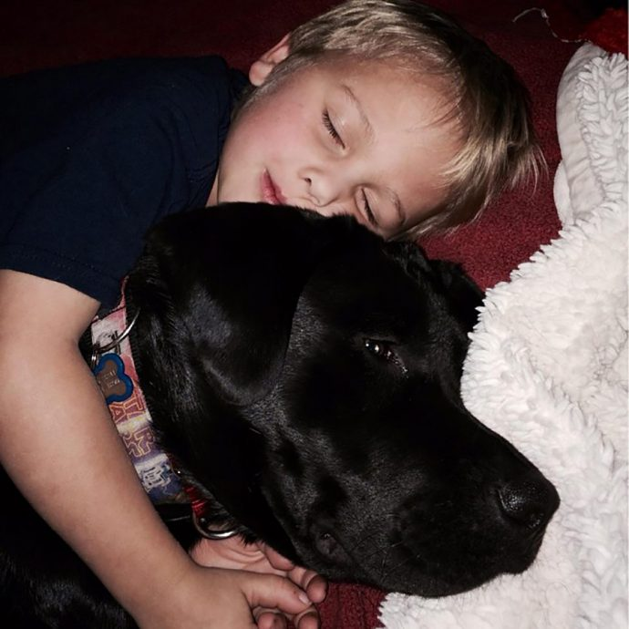 dog-saves-little-boy-middle-of-night-2