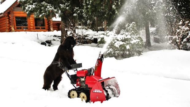 morgan-dog-snow-blower