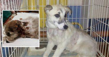 Новая жизнь Лауры! Омичи нашли искусанного 2-месячного щенка и вернули ему счастливое детство!