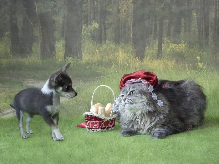 А давайте поменяем конец! Самая добрая фото-сказка про Волка и Красную Шапочку) рис 4
