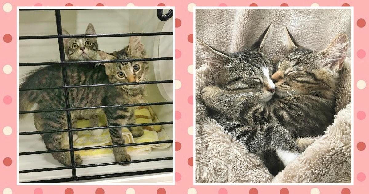Пара пришла в приют за котёнком. Но увидев в клетке неожиданную картину, они приняли лучшее решение!
