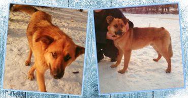 Судьба Бима: когда пса хотели усыновить, он внезапно исчез с улицы… Нашли его просто чудом! :)