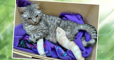 """""""Он выбросил его из окна!"""" Девушке пришлось убегать от хозяина с котом на руках..."""