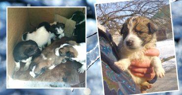 «Их выкинули так, чтобы подальше и побезнадёжней…» Парень с ротвейлером спасли 6 щенков!
