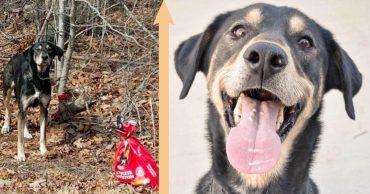 Пёс был привязан к дереву и оставлен в лесу... С пакетом корма и важной запиской!