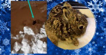 Крошечная зайчиха потеряла семью и беспомощно бегала по снегу с оледеневшей шерстью... Пока ее не нашли в аэропорту!
