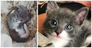 Серый котёнок едва увидел мир, как сразу потерялся... Но разве могли остаться ничейными эти голубые глазки?)