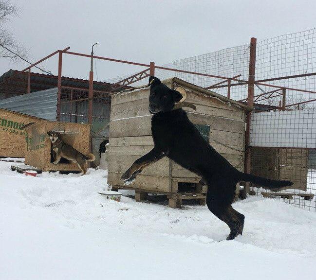 Картинки из собачьей жизни: вот как мы радуемся снегу, вдруг выпавшему в Евпатории! рис 2