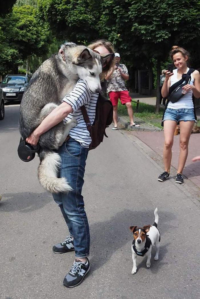 cute-huskies-3-5aafd298c98ad__700