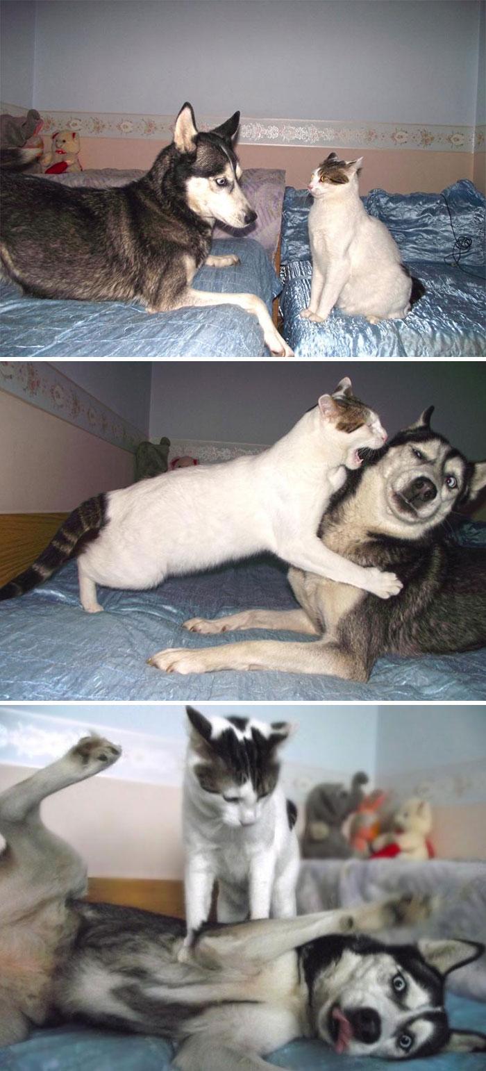 cute-huskies-47-5aab9c32b92d9__700