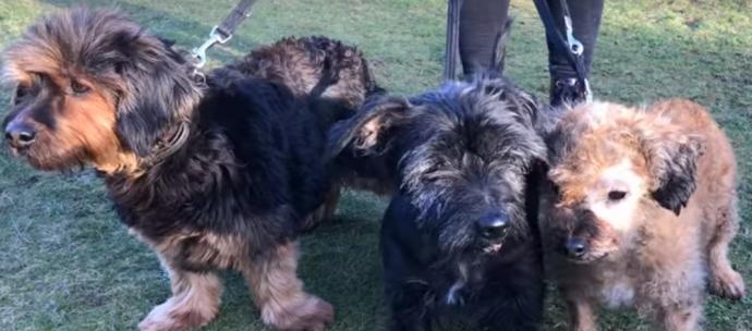 terriers5
