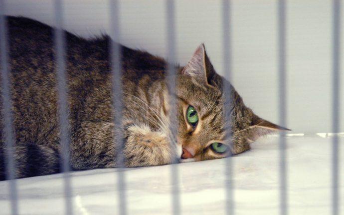 Кот с зелеными глазами в клетке
