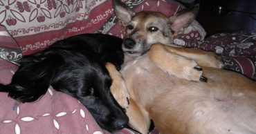4 приютских собаки были никому не нужны! Но благодаря Оле, теперь они светятся от счастья...